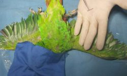 consultorio-veterinario-ZOO-PETS-zihuatanejo-2.jpg