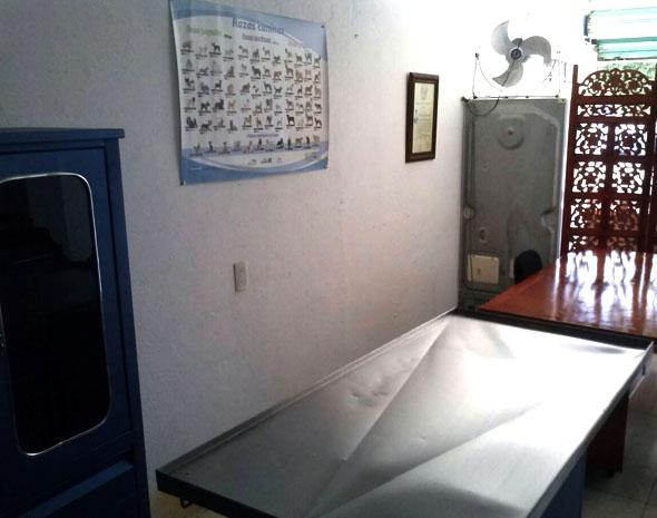 consultorio-veterinario-ZOO-PETS-zihuatanejo-5.jpg