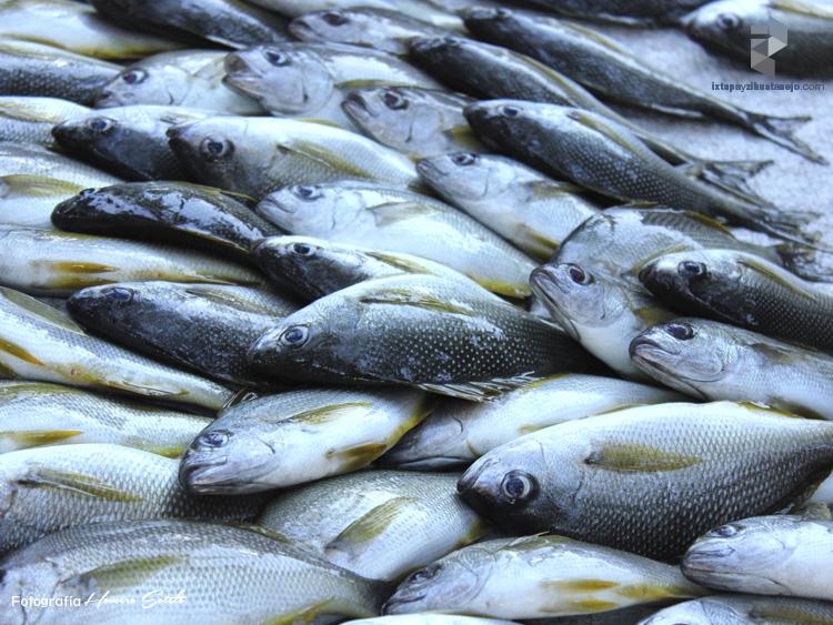 pesca-en-ixtapa-zihuatanejo