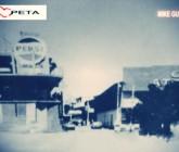 El Cine en Petatlán y Zihuatanejo